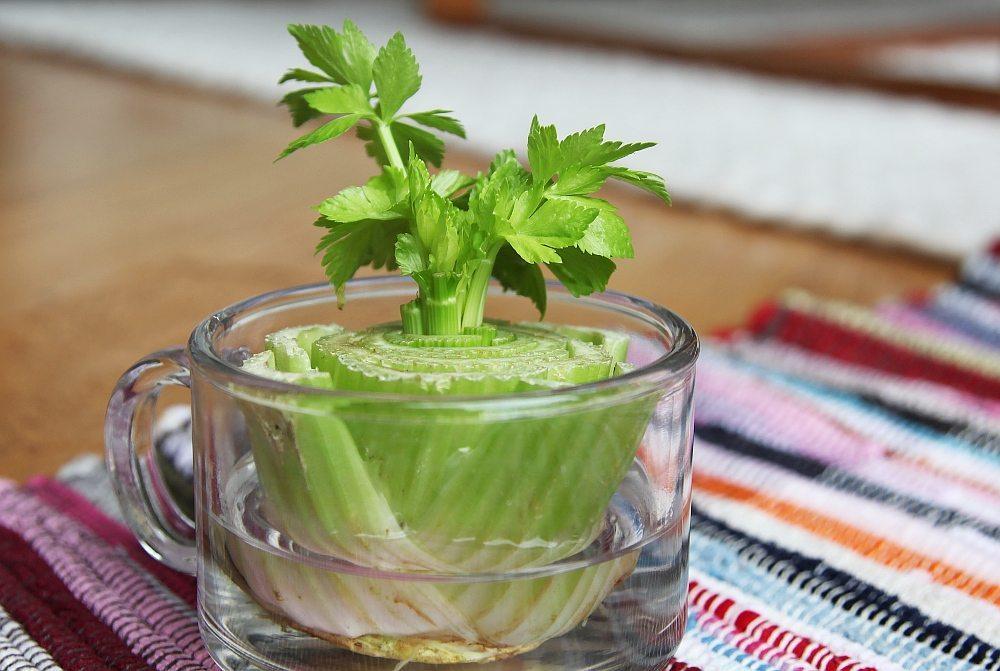regrow-celery