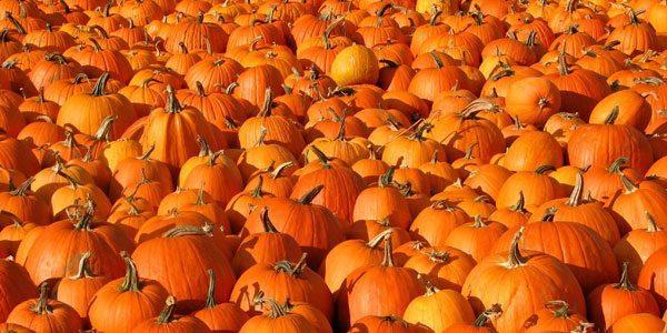 regrow-pumpkin