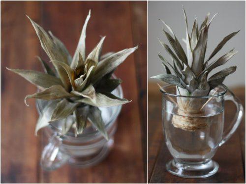 regrowing-a-pineapple
