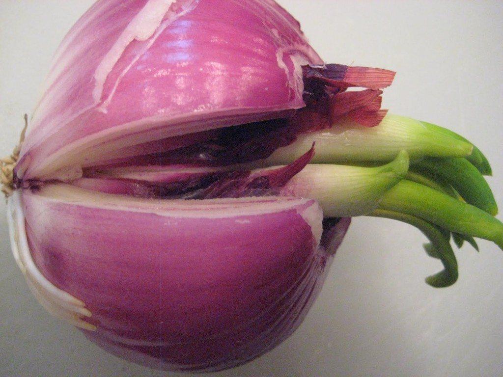 rewgrow-onion